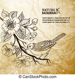 branch., madár, húzott, sacura, kéz