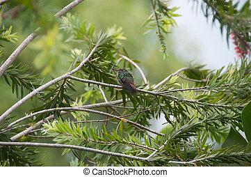 branches., jégmadár, közé, fényes, zöld, kicsi, őt ül, madár