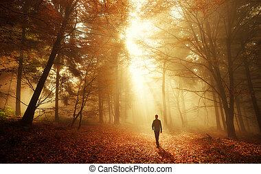 breathtaking, jár, ősz erdő, fény
