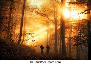 bringázás, erdő, szürrealista, kedélyállapot, fény