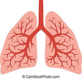 (bronchial, emberi, tüdő, system)