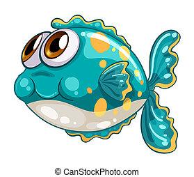 buborék, fish