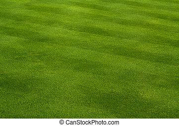 buja, fű, zöld