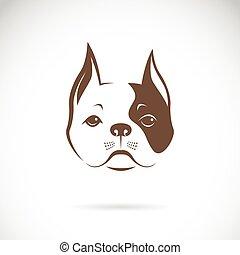 bulldog., kutya, arc, háttér., vektor, állat, fehér, logo.