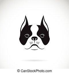 bulldog, kutya, arc, háttér., vektor, fehér