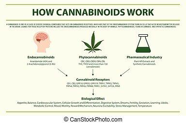 cannabinoids, infographic, munka, horizontális, hogyan