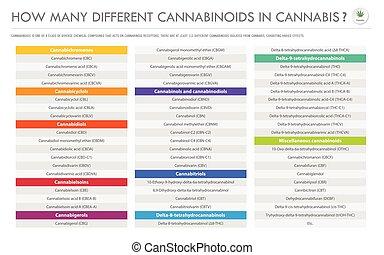 cannabinoids, kender, ügy, infographic, különböző, horizontális, sok, hogyan