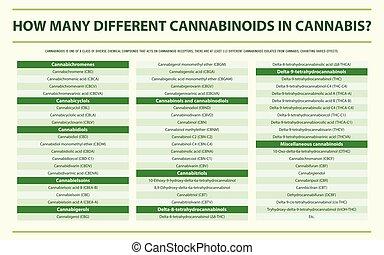 cannabinoids, kender, infographic, különböző, horizontális, sok, hogyan