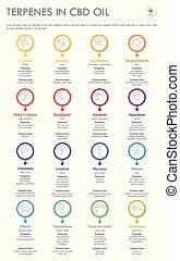 cbd, olaj, infographic, függőleges, ügy, formulák, szerkezeti, terpenes