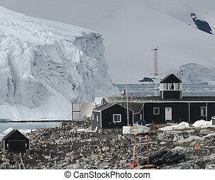 chilei, öböl, kutatás, félsziget, antarktisz, alap, paradicsom, antarktisz, helyezkedő