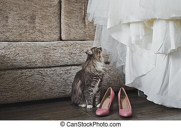 cipők, 5723., macska, szipákol, esküvő öltözködik