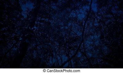 csúszás, éjszaka, alatt, rainforest
