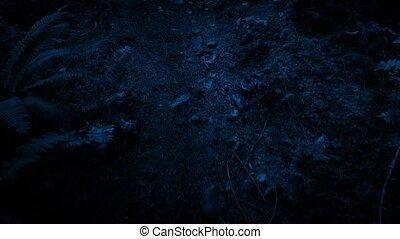 csúszás, út, erdő, mentén, éjszaka