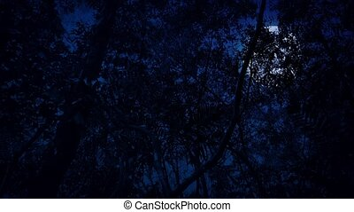 csúszás, alatt, dzsungel, éjszaka