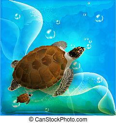 család úszás, óceán, teknősbékára halászik