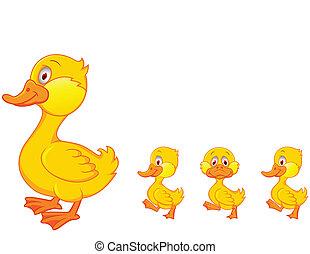 család, kacsa