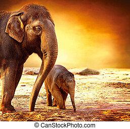 csecsemő, anya, szabadban, elefánt