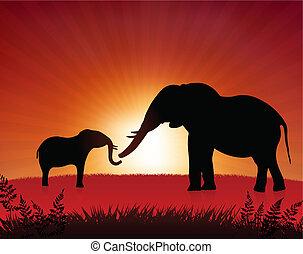 csecsemő elefánt, napnyugta, háttér, anya