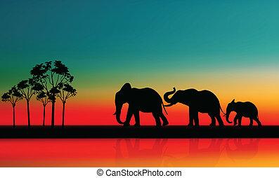 csecsemő, gyalogló, anya, elefántok