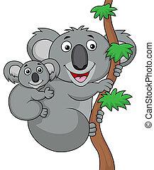 csecsemő, koala, anya
