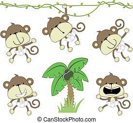 csecsemő, majmok