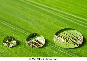 cseppecskék, levél növényen, három, háttér
