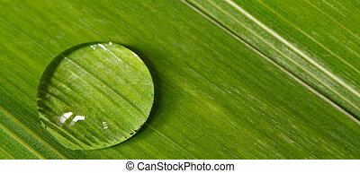 cseppecske, levél növényen, háttér, harmat