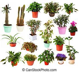 cserepes növény, pots., elszigetelt, állhatatos, fehér