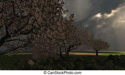 cseresznye, eredet, bitófák, villámlás viharzik, (1018)