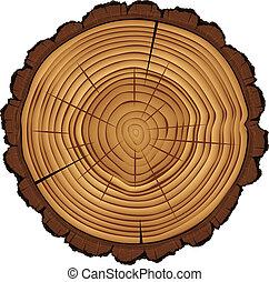 csikk, szakasz, fa, kereszt, elszigetelt, fehér