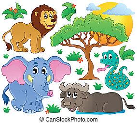 csinos, 2, állatok, gyűjtés, afrikai