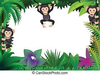 csinos, csimpánz, dzsungel