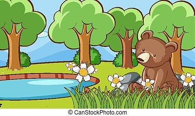 csinos, hord, színhely, erdő