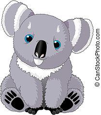 csinos, koala