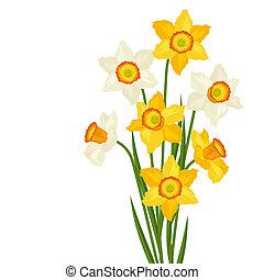 csokor, háttér., white virág, nárcisz