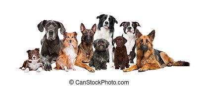 csoport, kilenc, kutyák