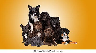 csoport, kutyák, fényképezőgép, látszó, nyolc