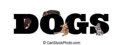 csoport, kutyák, négy, irodalomtudomány, mindenfelé, fekete