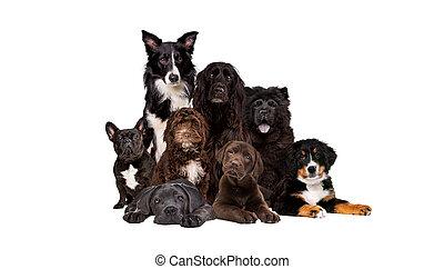 csoport, nyolc, fényképezőgép, látszó, kutyák