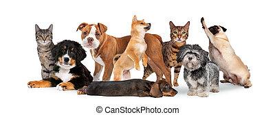 csoport, nyolc, korbácsok, kutyák