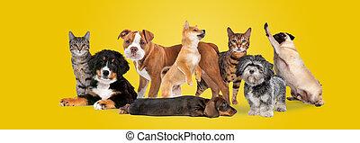 csoport, nyolc, kutyák, korbácsok