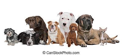csoport, nyolc, kutyák