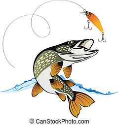 csuka, csábít, halászat