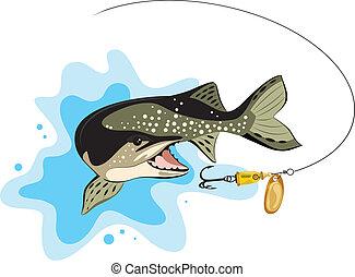 csuka, csábít, vektor, halászat