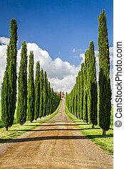 cypresses, toszkána, agritourism, út, között