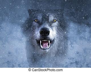 dörmögő, szürke, snow., vakolás, farkas, 3