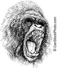 dühöngő, ábra, emberszabású majom