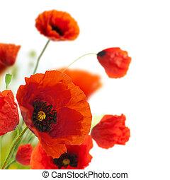 dekoráció, -, menstruáció, mákok, virágos, sarok, határ, tervezés