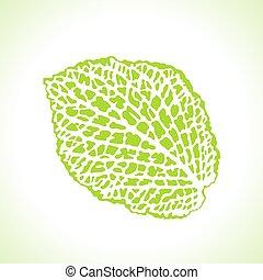 dekoratív, részletes, levél növényen, isolated., makro, ábra, természetes