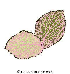 dekoratív, részletes, természetes, isolated., zöld, ábra, elvont